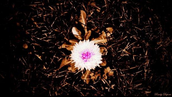 Fleur chocolat pour vous souhaiter un bon lundi de Pâques