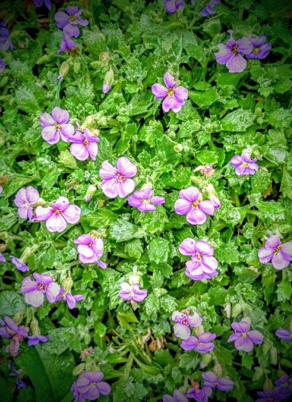 Petites fleurs du jour