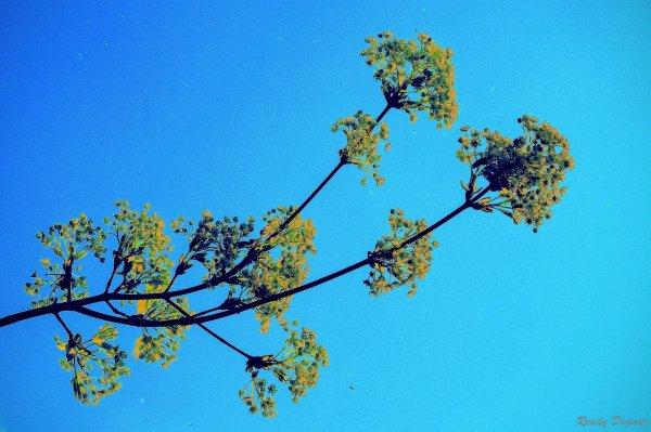 Auprès de mon arbre, je vivais...