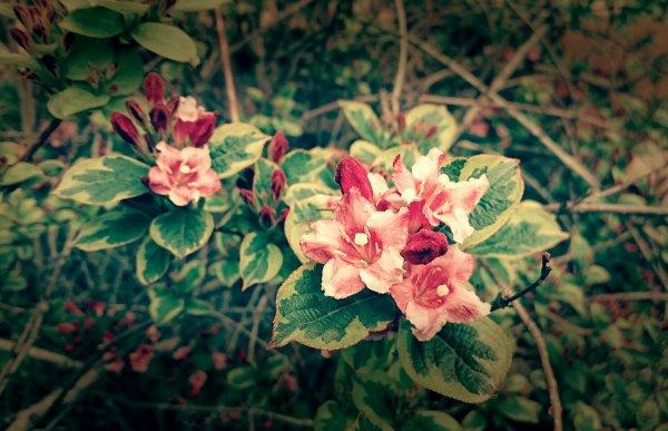 Petites fleurs du jour pour vous