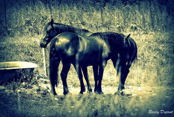chevaux au vent...