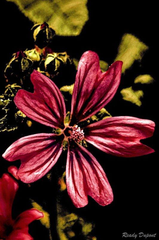 fleurs d'été en automne