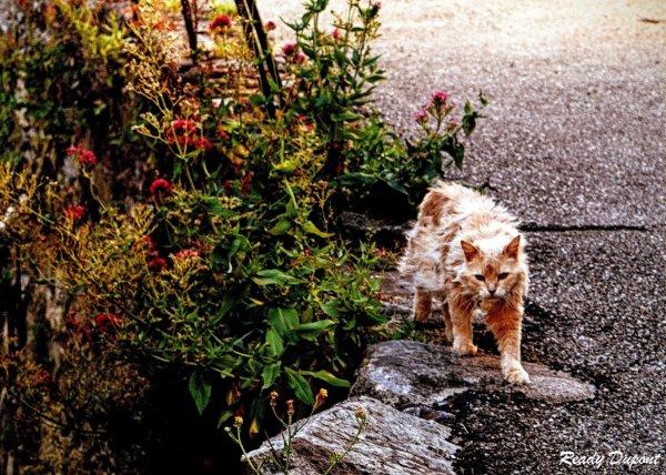 le chat du village nous offre une fleur
