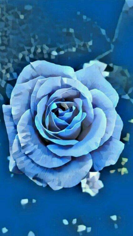 Petite photo de rose pour une belle soirée
