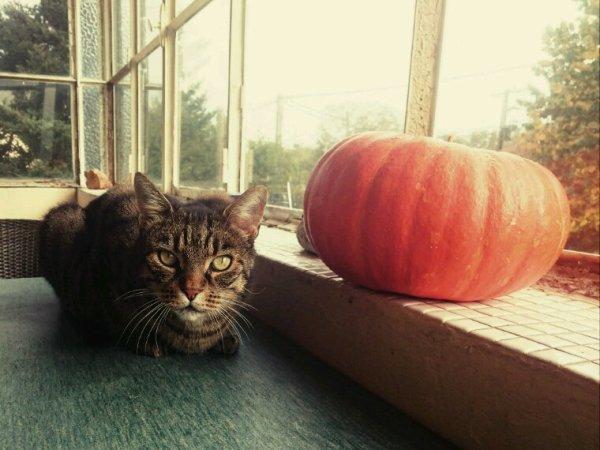 Doudou halloween ?