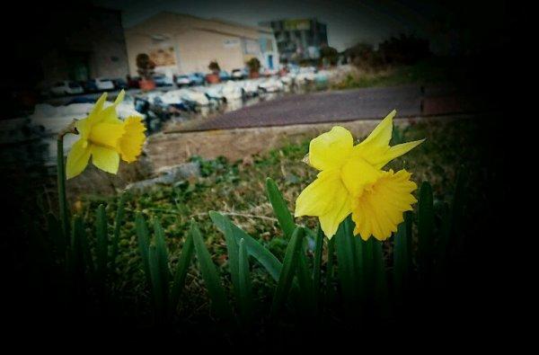 Juste croire encore..  En un nouveau printemps.