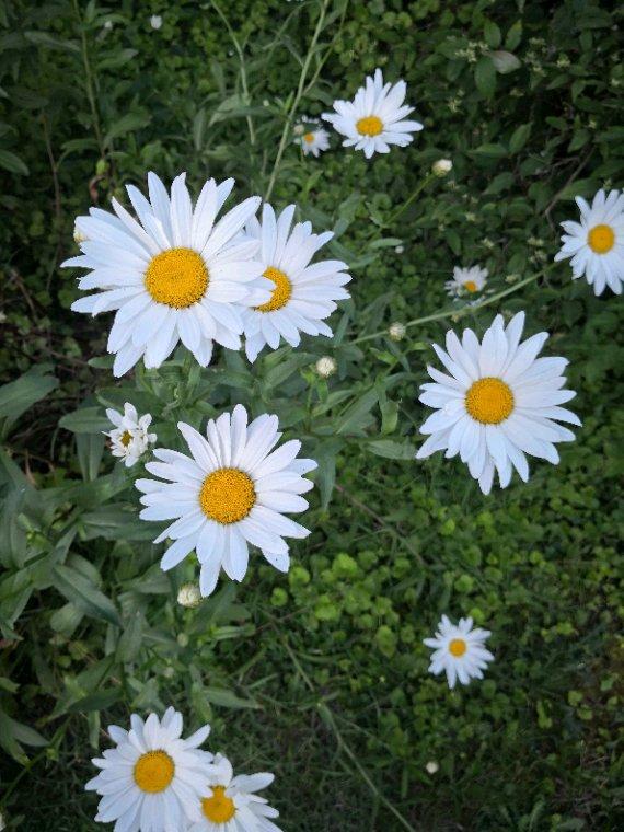 Quelques fleurs déposées pour vous souhaiter une belle journée