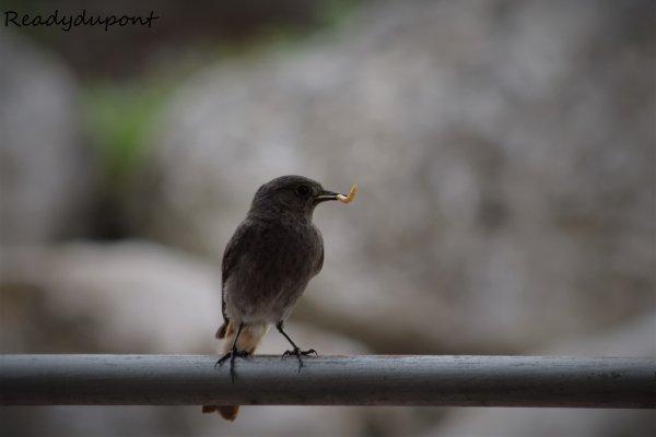 N'oiseau 2!