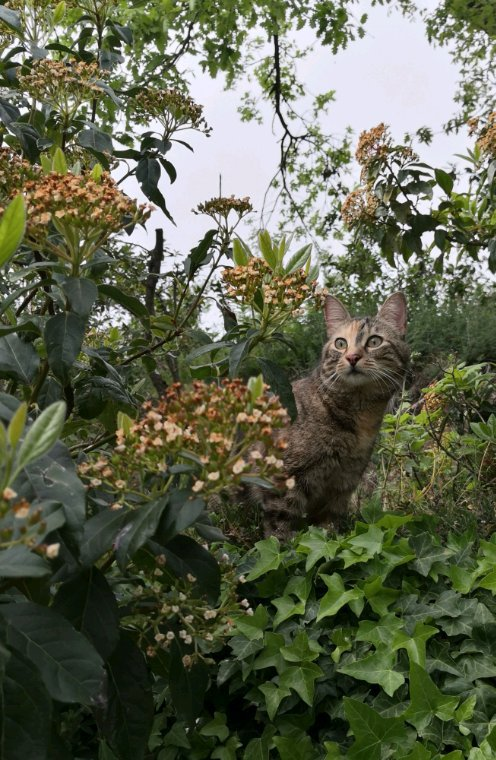 En promenade avec cat !
