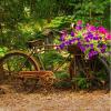 vieux velo porte fleurs