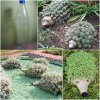 bouteille herissons cactus