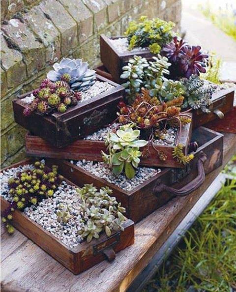 deco vieux tiroirs pour cactus ou plantes grasses