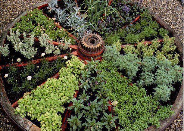 vieille roue en jardin d'herbes aromatiques