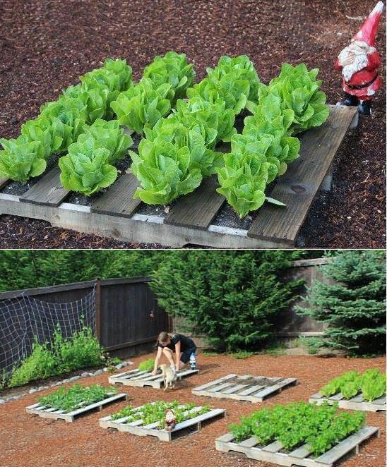avoir des salades bien ranger c'est possible avec des palettes