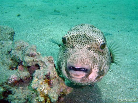 Mais d'où viennent réellement les poissons panés ?
