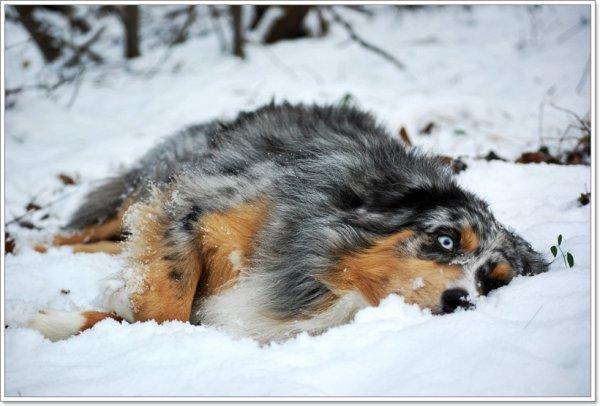 Dans la neige <3