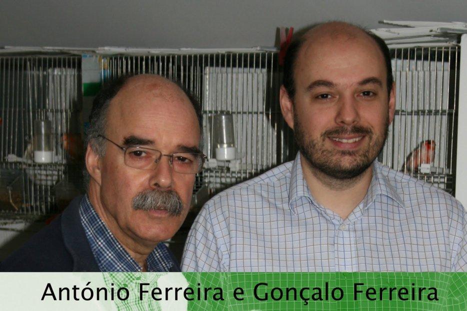 Mundo dos Canários - Canaril Desportivo Ferreira - STAM 666H