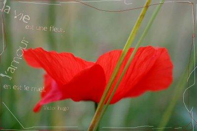 A fleur de peau...