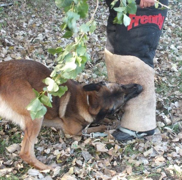 Ischa Du Lac De Naxos et Rex fils de G'Xena les 2 chiens de Domi