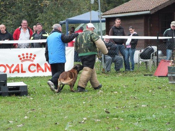 Brevet des HA 2012 au Club Canin de Pommereoul