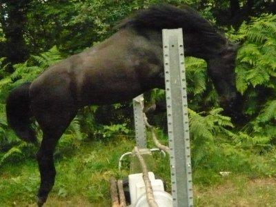 Il est facile de monter sur ses grands chevaux, mais essayez donc d'en descendre gracieusement!