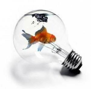 Les idées fuses...