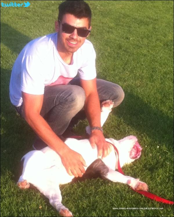 + 06.05.2011   Joe est allé promener son chien Winston au parc : +