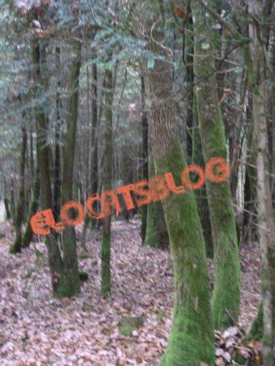 Promenade en forêt (Photos prise par moi).