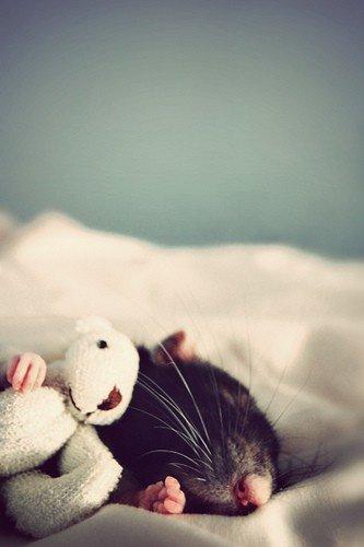 jolies images d'animaux