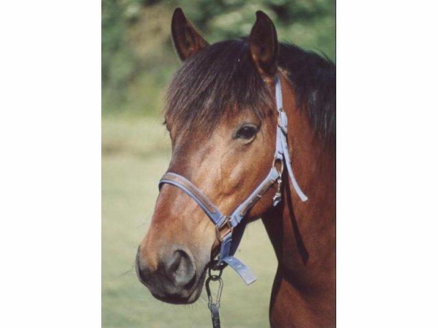 mes chevaux préféré(e)s