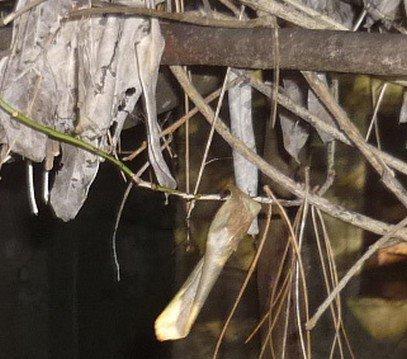 Fantôme ou imaginaire ou bien réelle: janvier 2010