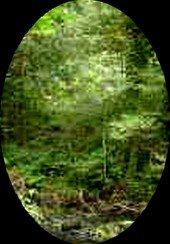 Fantôme ou imaginaire ou bien réelle: photo du 15 08 2009
