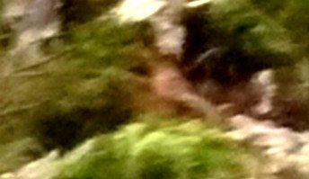 Fantôme ou imaginaire ou bien réelle photos du 12 02 2010
