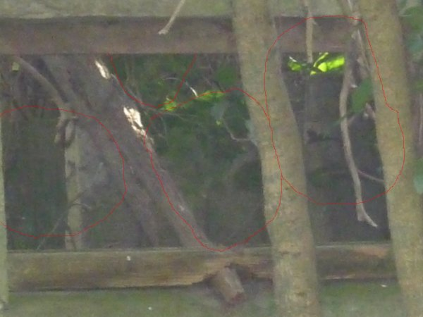 Fantôme ou imaginaire ou bien réelle : photo du 19 02 2010