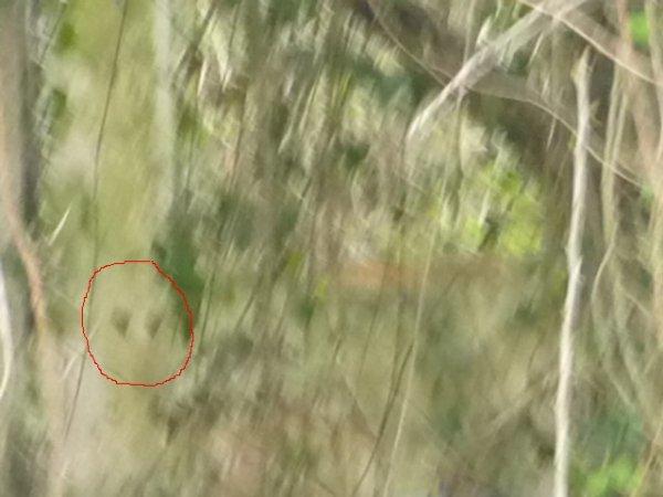 Fantôme ou imaginaire ou bien réelle : photo du 11 04 2010