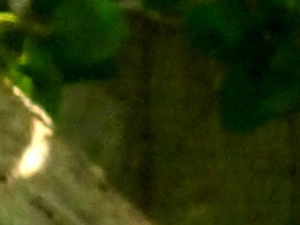 Fantôme ou imaginaire ou bien réelle : photo du 14 04 2010