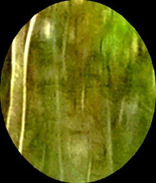 Photo du 02 01 2011 esprit de la forêt !