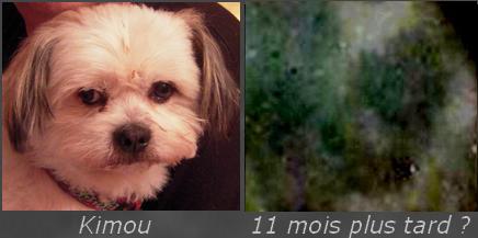 Kimou le chien ?