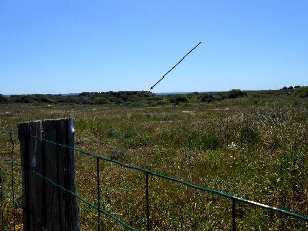 Les Rods, également appelés Flying Rods