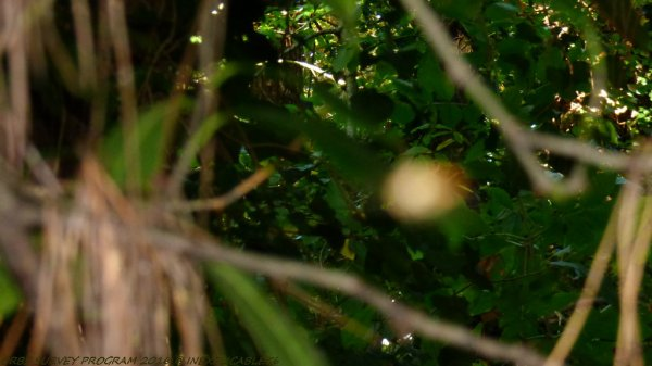 Orbe filmée et photographier se déplaçant Dimanche 16 octobre 2016 16:01