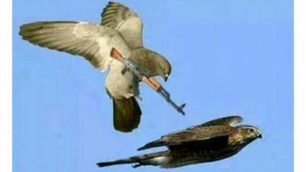 Attention n'oubliez pas que la chasse est ouverte