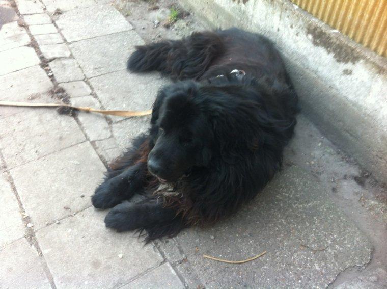 Dedicace pour éros le plus gentil chien