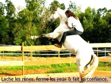 (Petite parenthèse pour nos amies les chevaux <3)
