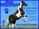Photo de poneys-horses