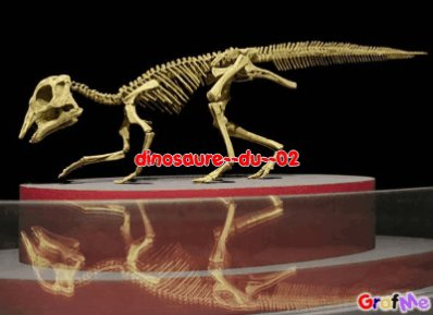 Diinosauure Carniivore!!