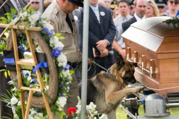 chien policier qui dit adieu son maître