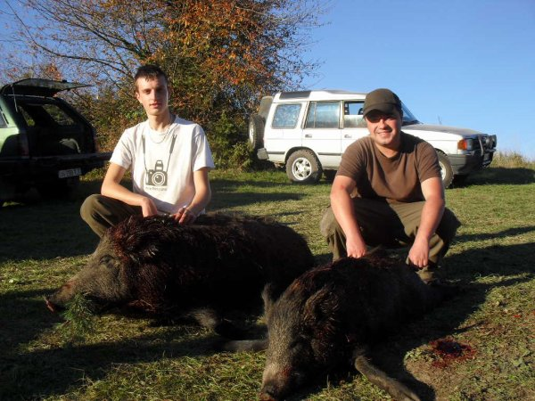 Chasse Sanglier 01/11/2015