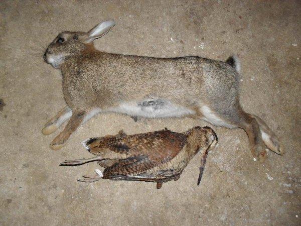 Journée de chasse le 09/01/2016