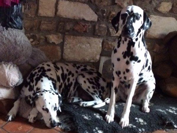 Daisy et Uranie
