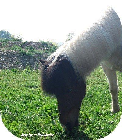 Un poney parmi tant d'autres ... Pourtant il est essentiel à mon coeur ♥